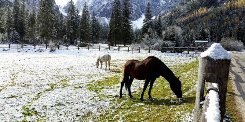 Frostsichere Tränke für Pferde - REKUBIK® Magazin