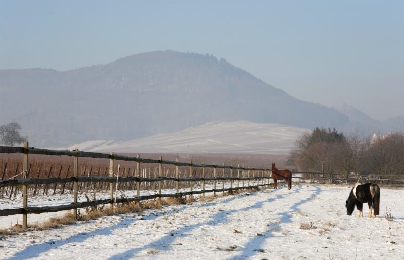 Pferdekoppel im Winter