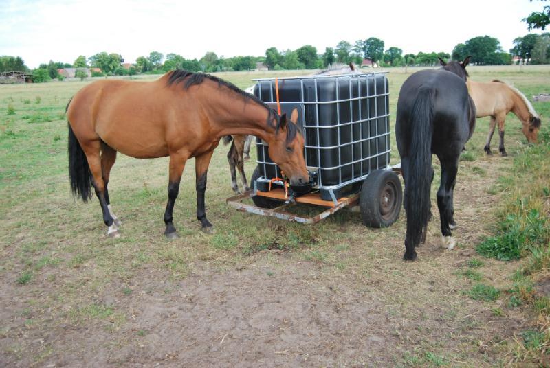 Ueberholter IBC Container als Tiertraenke