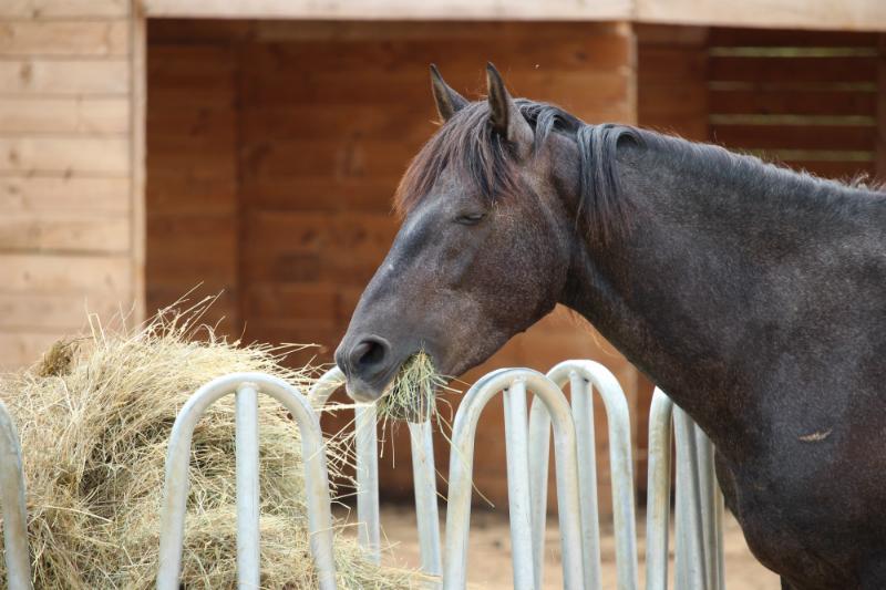 raufenprinzip-pferd
