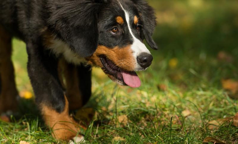Bauen Sie eine Hundehütte für Ihren vierbeinigen Freund