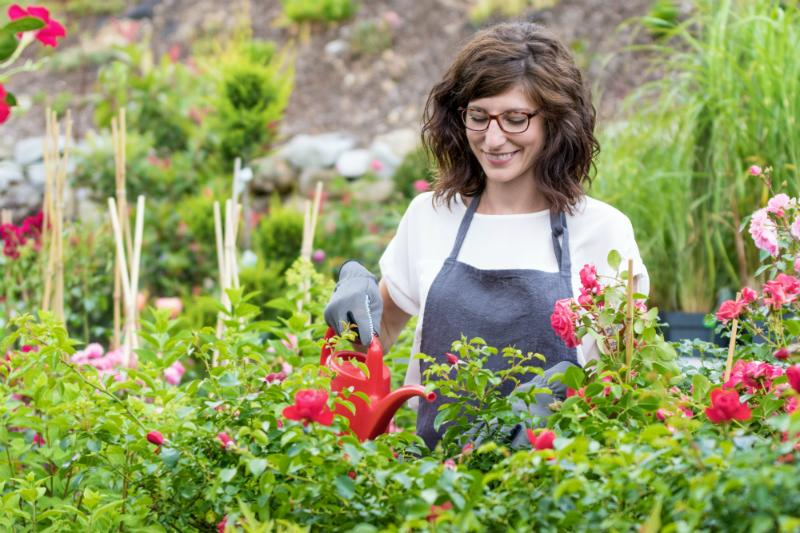 Laechelnde Floristin beim Giessen der Rosen
