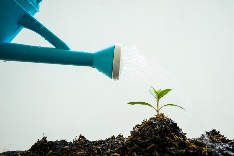 Ohne Naehrstoffe wachsen Pflanzen gar nicht