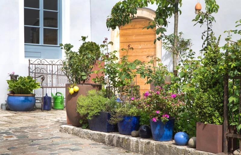 Kuebelpflanzen und Topfpflanzen