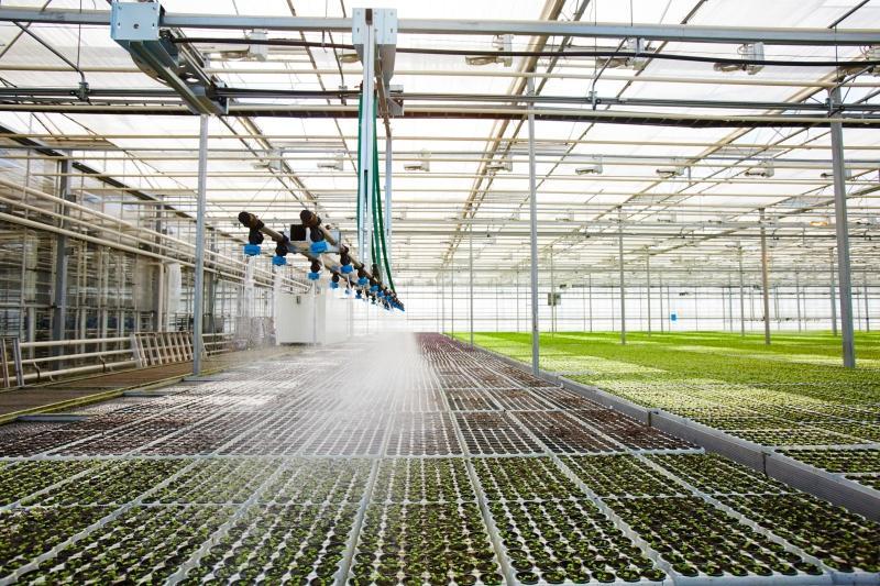 Bewaesserungssystem mit Spruehwasser von Jungpflanzen im Gewaechshaus