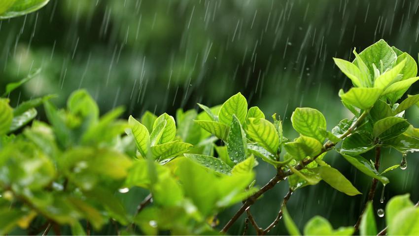 Die Nutzung von Regenwasser spart Geld und ist gut für die Umwelt