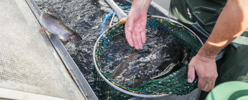 Fischzucht im eigenen Garten