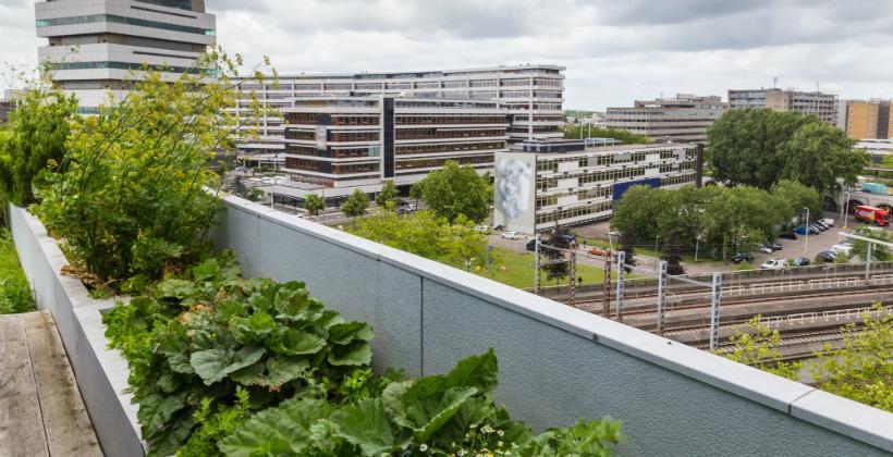 Ein Dachgarten in der Stadt
