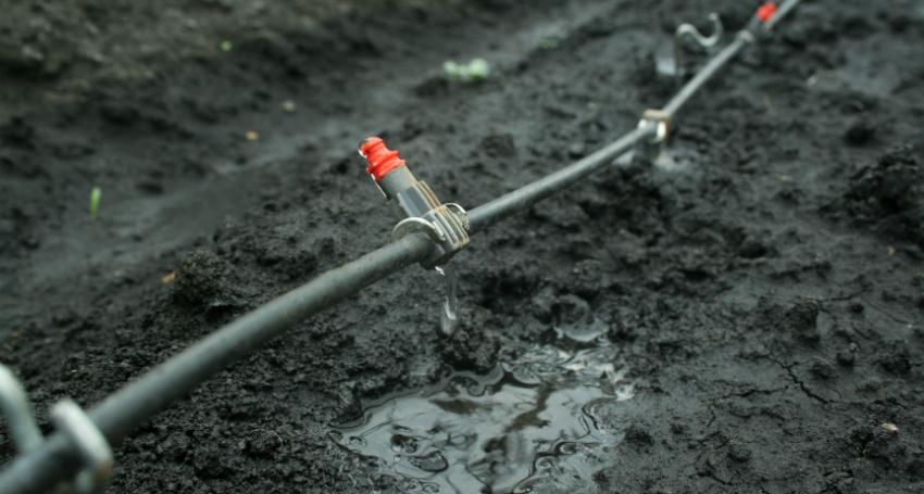 Tropfschlauch bewässert direkt die Wurzelregion