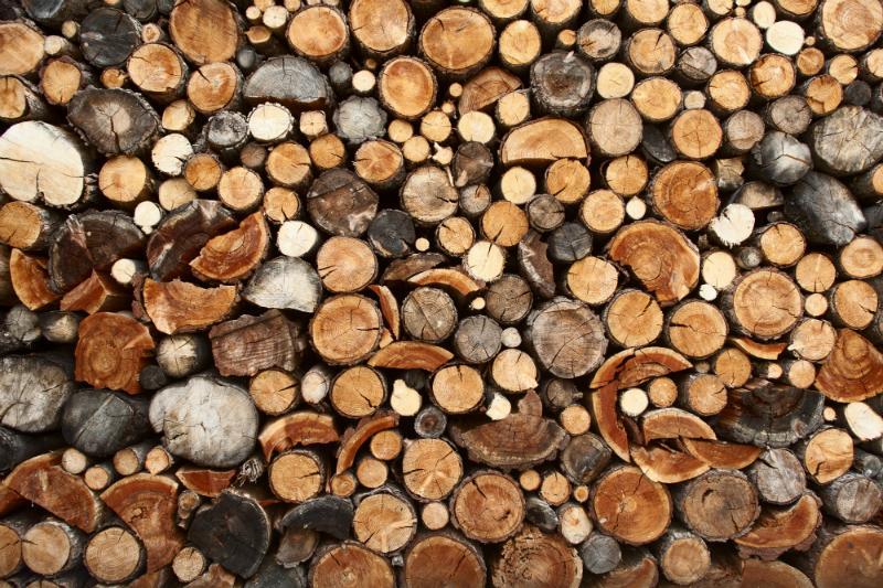 Feuerholz sollte gut geordnet und geschützt sein