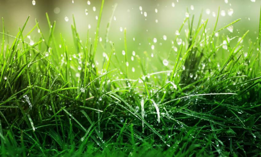 Bewässerung für Rasen und Garten während des Sommerurlaubes automatisieren