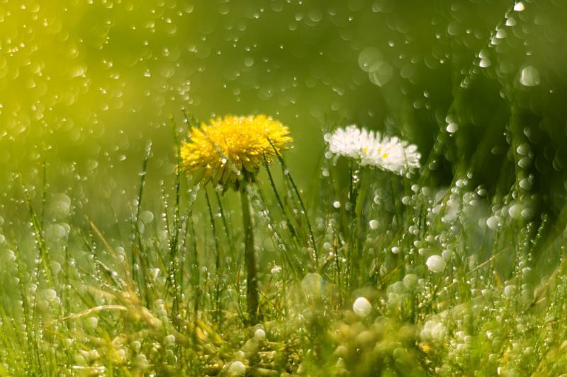 Das sammeln von Regenwasser ist besonders umweltschonend