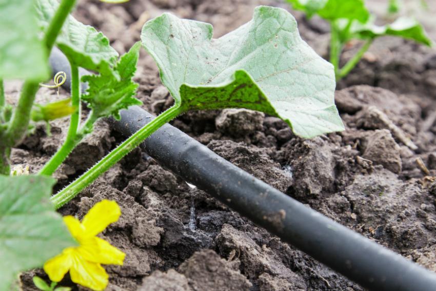 Ideale Lösung: Eine Tröpfchenbewässerung