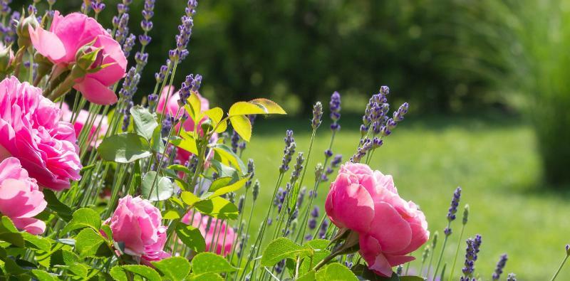 Ein wunderschöner Garten bedarf viel Pflege