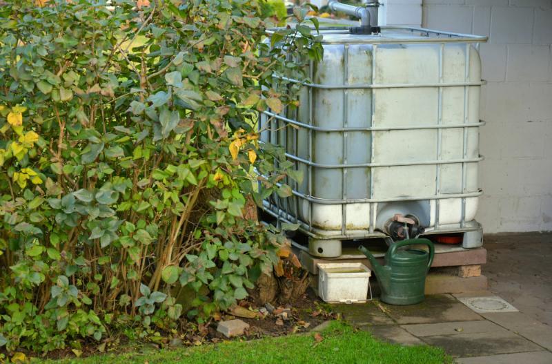 Gebrauchter IBC im Garten