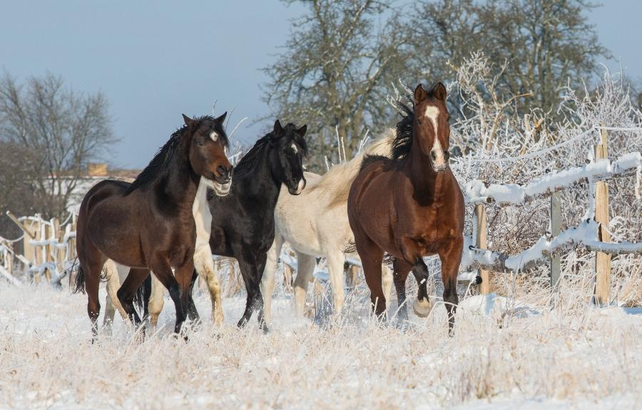 pferde-koppel-schnee