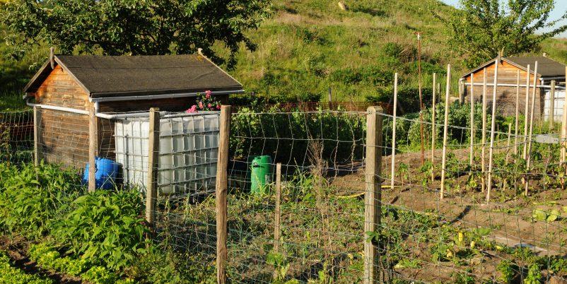 Big ist beautiful? Nicht immer große Wassertanks im Garten können überdimensioniert sein. Abhilfe schafft ein kleiner IBC.