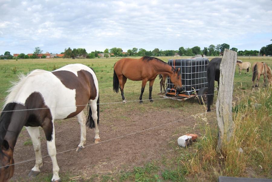 weidehaltung-pferde
