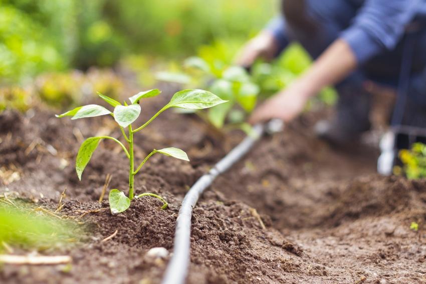 Arbeit im Garten mit Tropfbewaesserung gemuesegarten-bewaessern