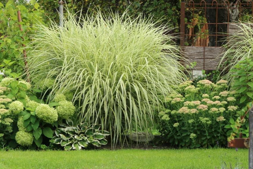 Gepflegter Sommergarten moderne Gartenanlage in gruen-weiss