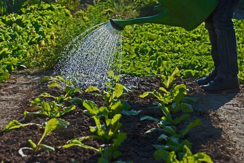 Nutz- und Brauchwasser zur Gartenbewaesserung