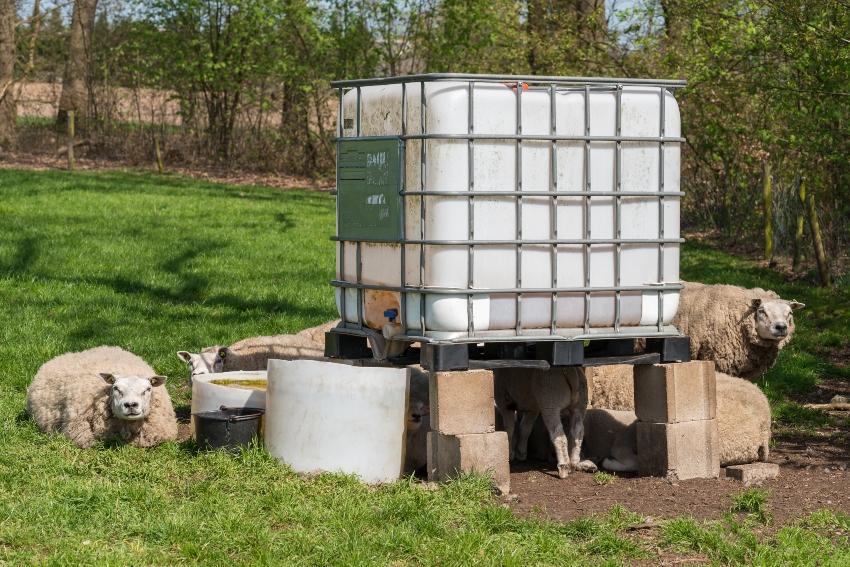 ibc-nutzwassertank-weide-ibc-nutzwassertank