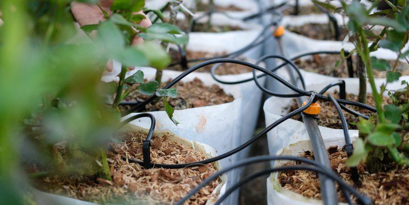 Bewässerung für Gewächshäuser