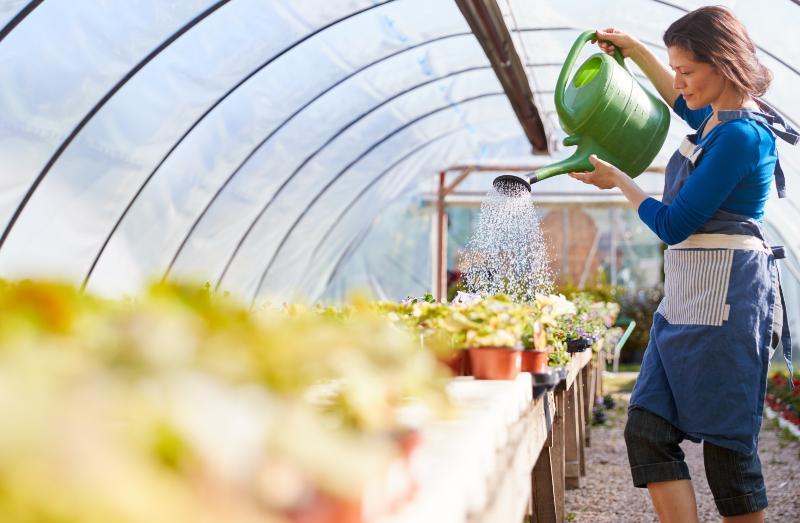 Die Bewässerung für Gewächshäuser per Gießkanne ist zeitaufreibend und unpraktisch
