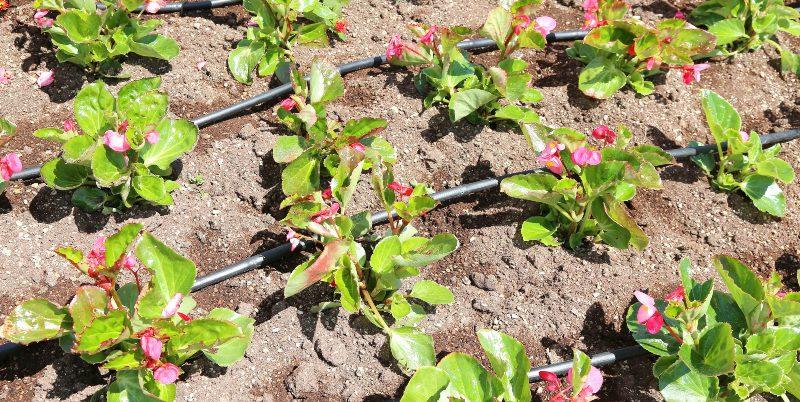 Hochbeet mit einer effizienten Hochbeet-Bewässerung