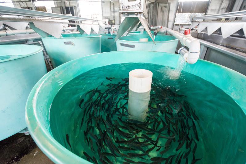 Fischzucht in Plastikcontainern