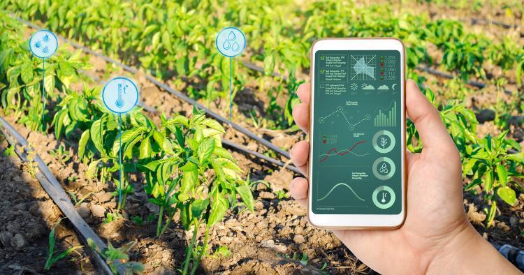 Handy kontrolliert Gartenbewässerung - unter anderem Elektromagnetventile