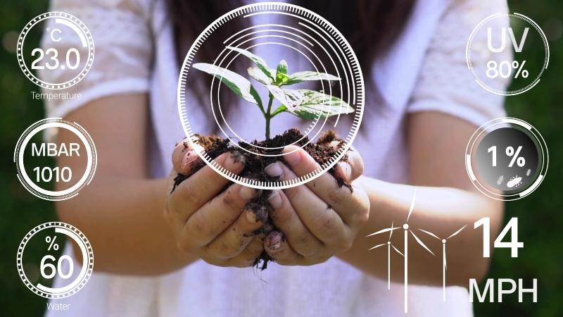 Bild einer Pflanze mit mehreren Messungen als Grafik