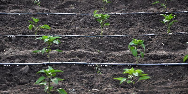 System einer Tröpfchenbewässerung