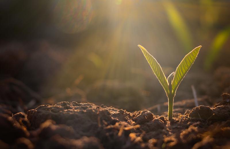 Junge Pflanze in der Nahaufnahme