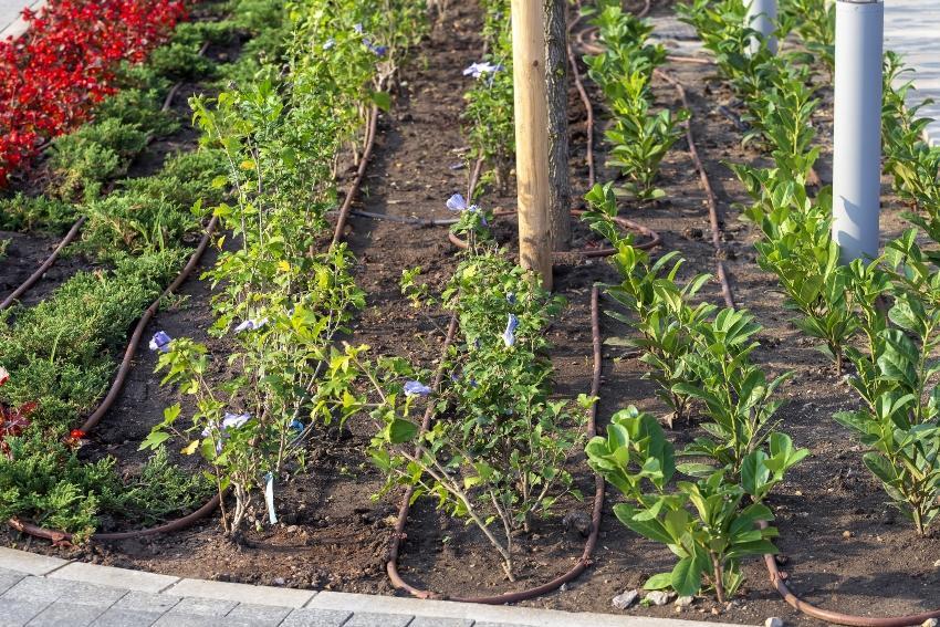 Garten mit Bewässerungssystem