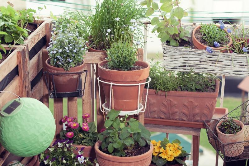 Balkongarten mit vielen Blumen