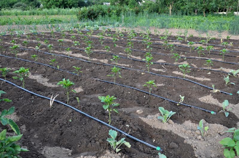 Tröpfchenbewässerungsanlage in einem Beet