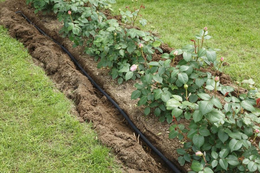 oberirdische-oder-unterirdische-bewaesserung-im-blumenbeet Gartenbewässerung