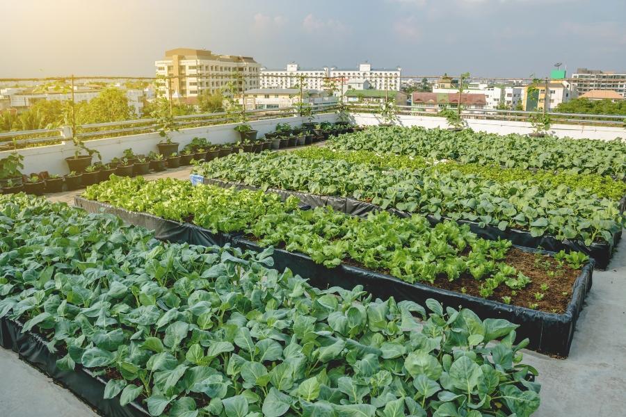Rooftop Farming Urbane Landwirtschaft