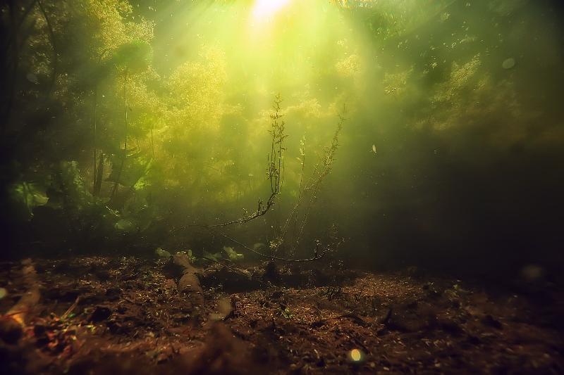 Algenplage im Aquarium