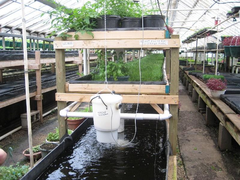 Aquaponik-Farm