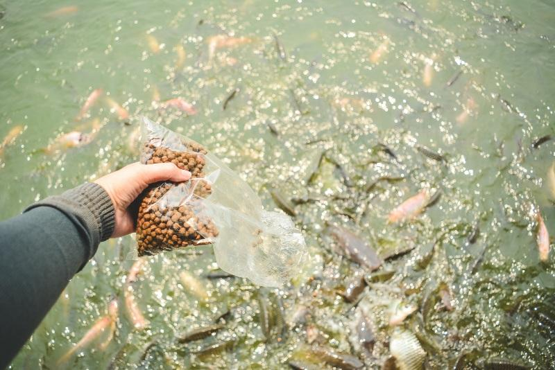 Fische füttern - Dünger