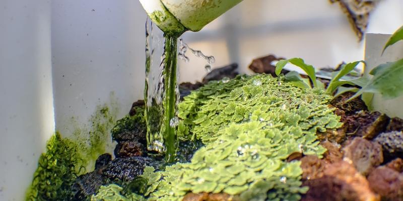 Aquaponik-Farm - Wassersystem