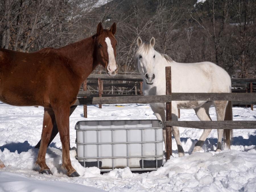 ausreichend-wasser-fuer-pferde-im-winter