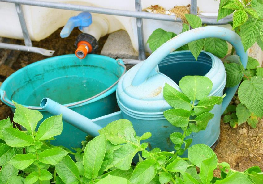 Am Auslaufhahn eines IBC-Containers stehen eine Gießkanne und ein Eimer im Garten.