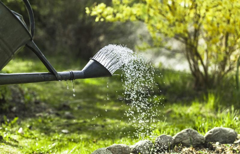 Mit einer Gießkanne wird ein Beet oberirdisch bewässert.