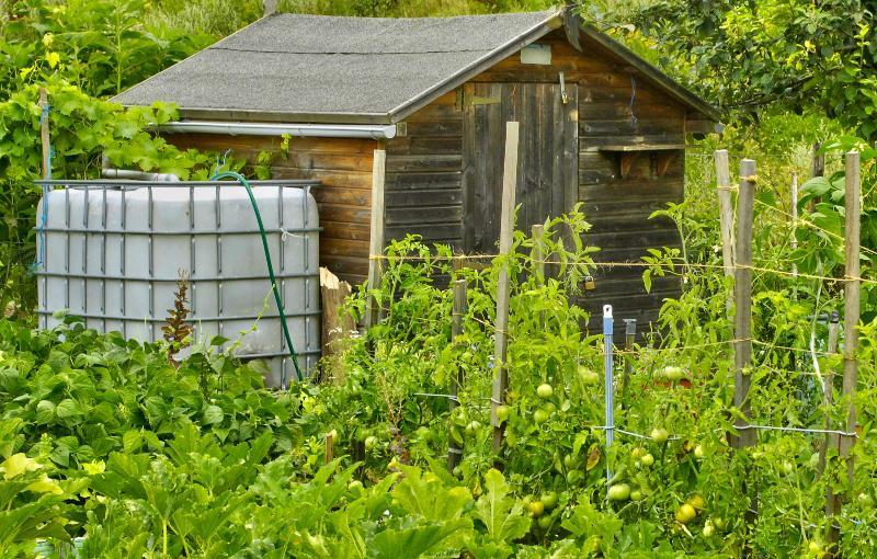 Ein IBC-Container, der in einem Garten steht und fast völlig von Hecken und Pflanzen verdeckt wird Distanzstück