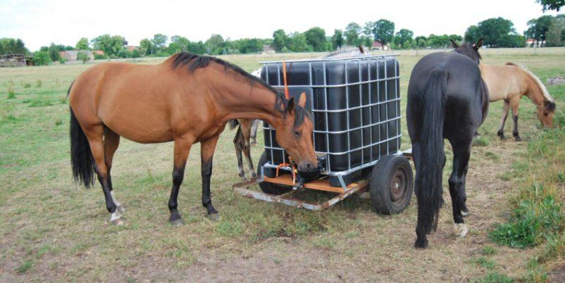 Pferde trinken aus Niederdrucktränke für den IBC