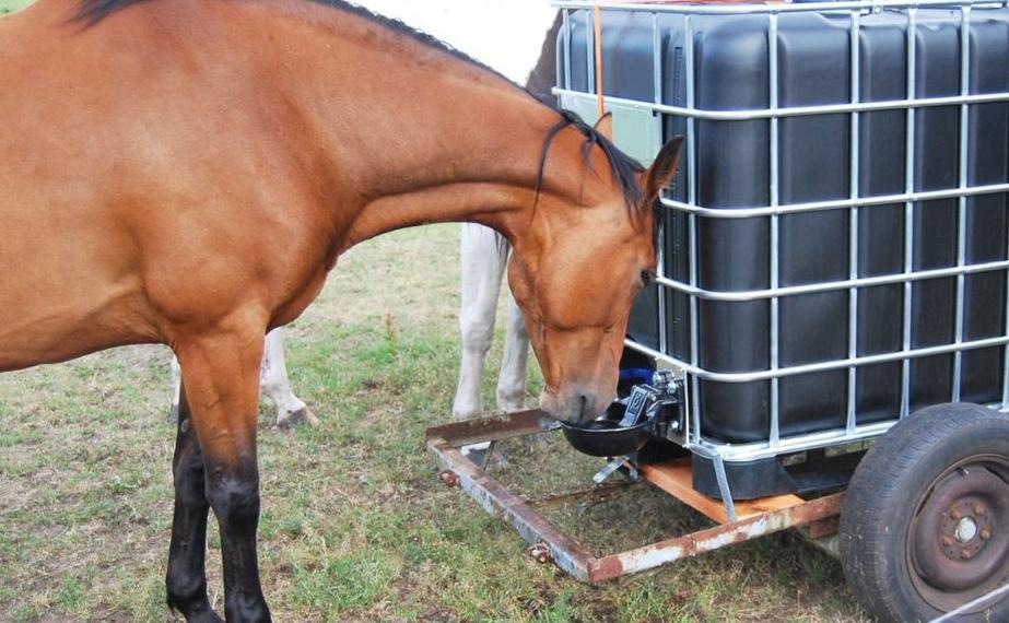 Pferd trinkt an IBC Container mit angeschlossener Tränke
