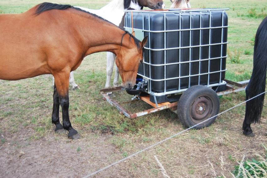 Pferd trinkt aus Tränke an einem IBC Container